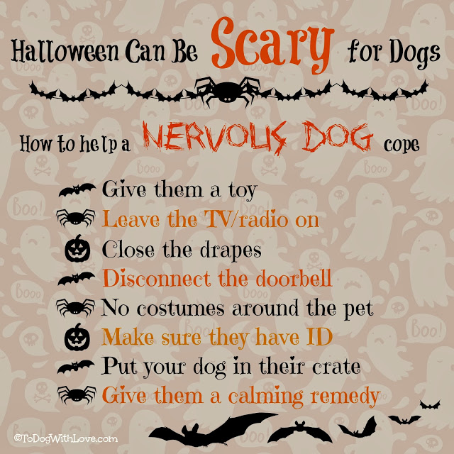 Halloween-tips-for-dog-owners