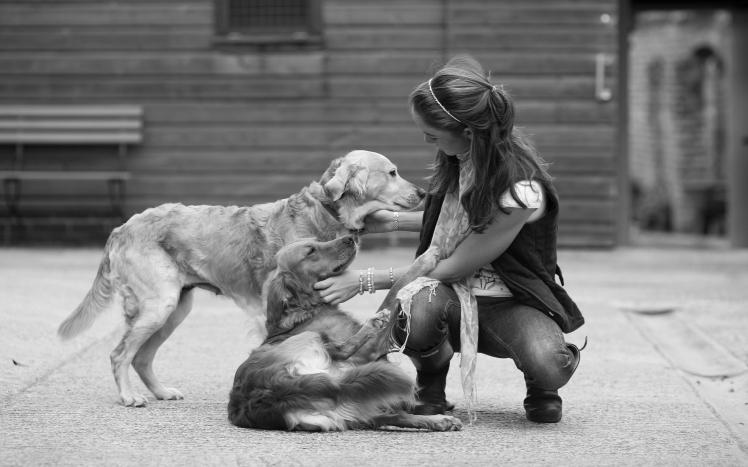 6923442-girl-dogs